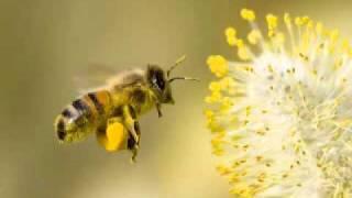 ماهر المعيقلي سورة النحل